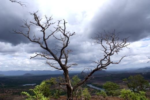 Monsoon cometh
