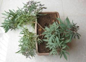 01-complete-plant