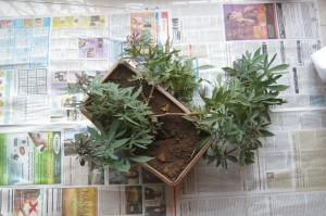 02-plant-with-newspaper